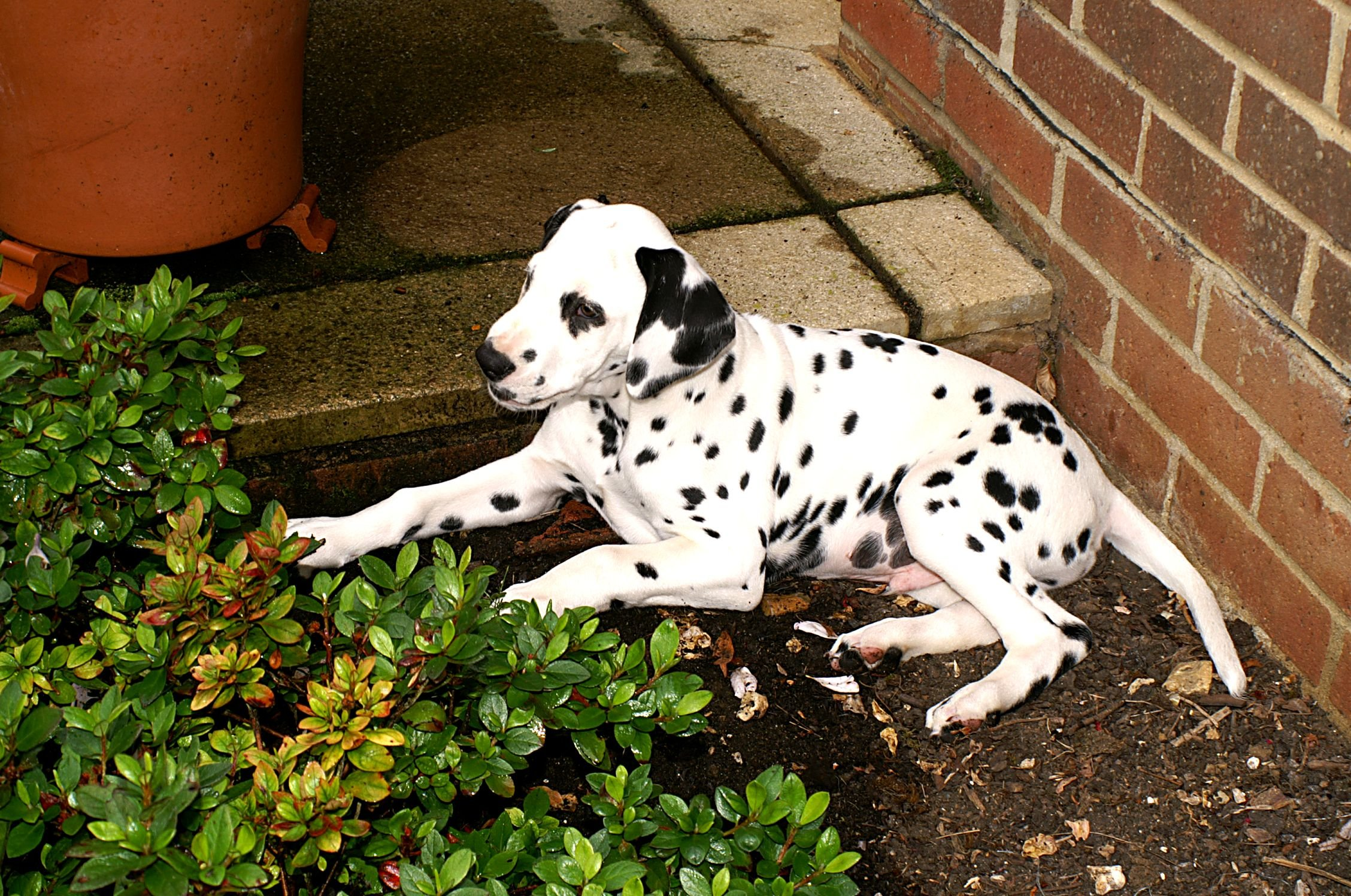 protecting your dog from the garden gardening and dogs
