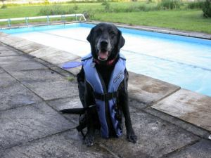 Dogs can wear lifejackets too