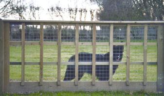 Special dog fencing